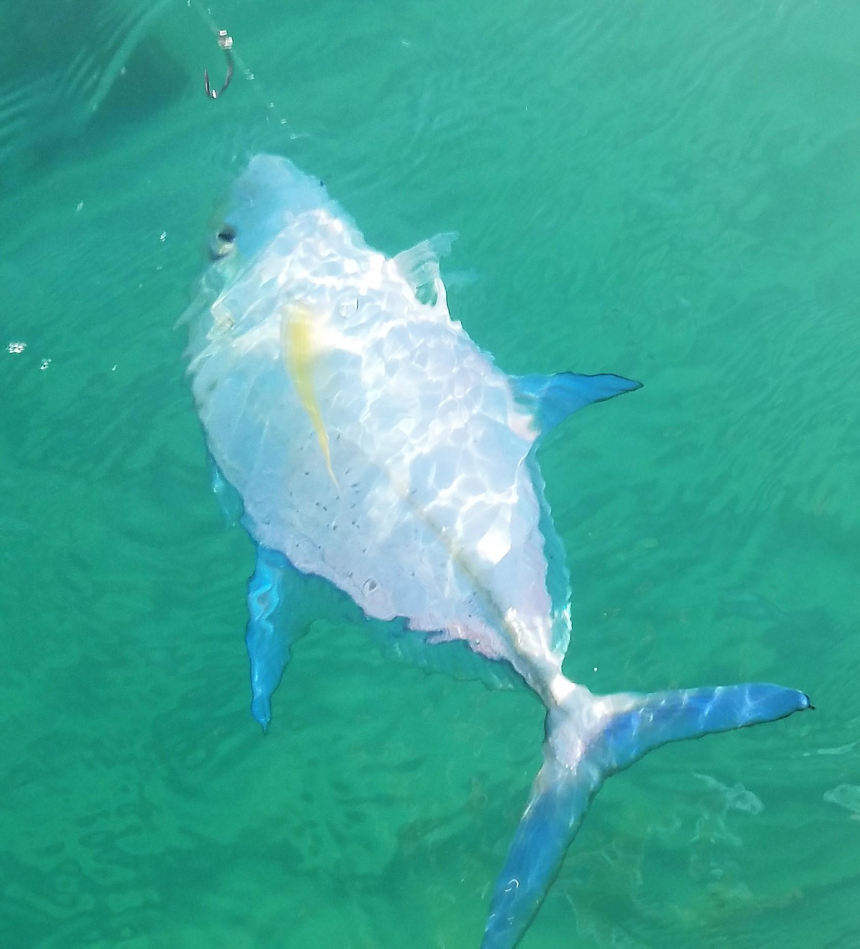 Hawaii nearshore fishing oahu still get fish really for Hawaiian moon fish